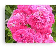Pink Flowers - Martha's Vineyard Canvas Print