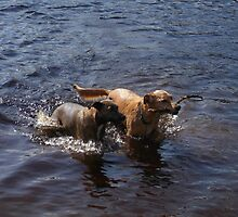 Having a paddle! by shelleybabe2