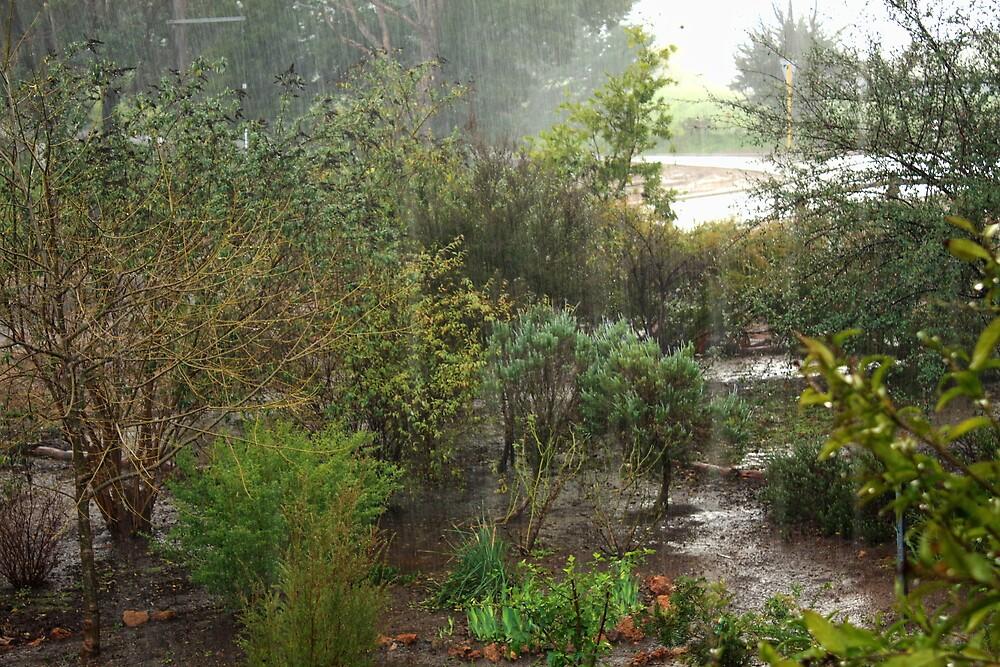 Down Came the Rain by Elaine Teague
