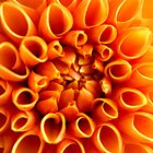 Dahlia in Orange by Audrey Clarke