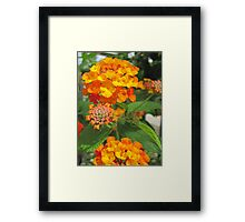 Orange beauty Framed Print
