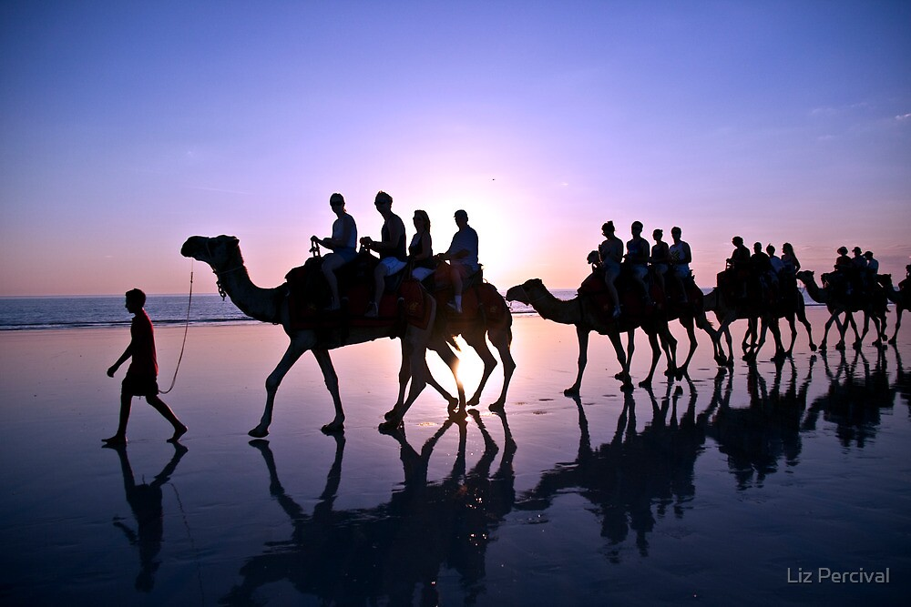 Camels in the Sunset by Liz Percival