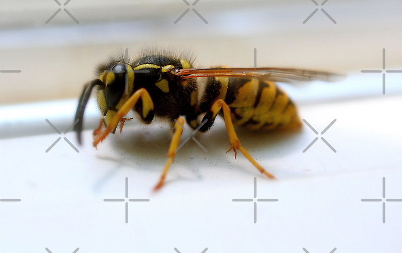 Dirty Face.   Wasp on window sill by mikrin
