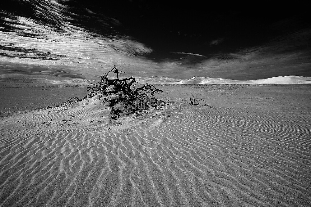 Desolate dunes, Australia by Jill Fisher