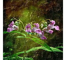 Flowers (Millenium Meadow - Whitchurch) Photographic Print