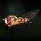 Hoverflies - Family - Syrphidae - (Insects, Spiders & Other Category)