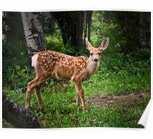 Deer Fawn Poster