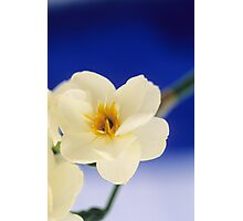 Narcissus Blue Photographic Print