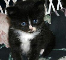 cute little kitty by wolf6249107
