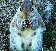 Squirrel Friend by Eileen Brymer