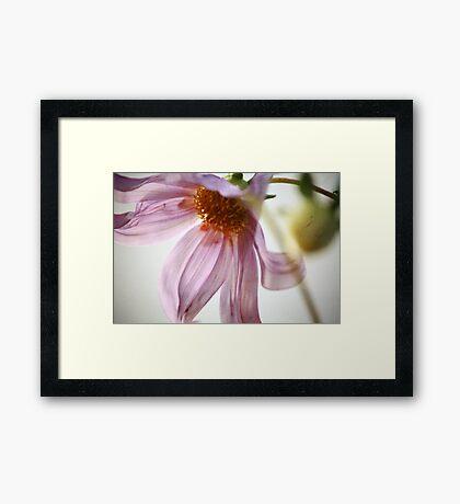 ~ The Dance ~ Framed Print