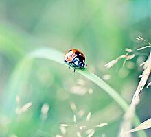 Ladybug by Michaela Rother