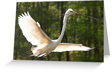 YIPPIE...... A stick for my Nest Oh Boy by TJ Baccari Photography