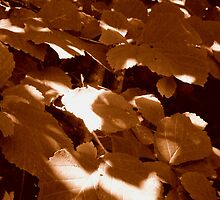 Summer Shadows in Sepia  ^ by ctheworld