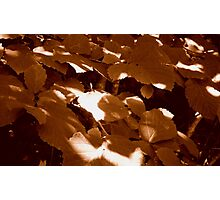 Summer Shadows in Sepia  ^ Photographic Print