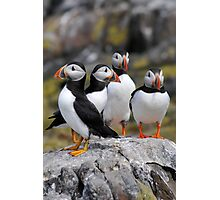 Puffin Group Photographic Print
