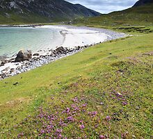 Wildflowers at the Beach by Phil Millar