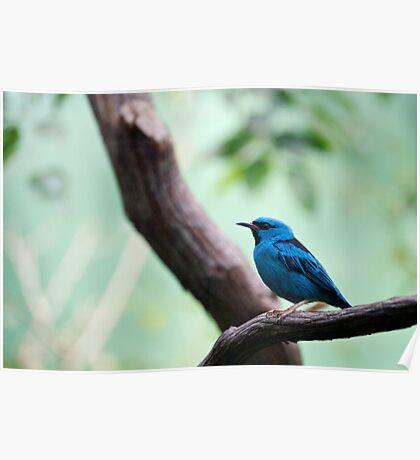 Tiny Blue Bird Poster
