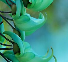 Jade Vine by Antionette