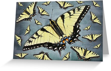 Tiger Swallowtail Butterfly by MotherNature