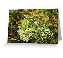 Little cups of Cup Lichen  Greeting Card