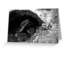 Snake in black & white Greeting Card