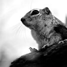 Chipmunk in black & white by Lauren Neely