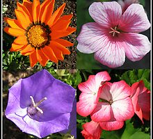 Pretty Foursome - Sunlit Summer Flowers Collage by BlueMoonRose