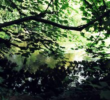 Undergrowth - Buntingsdale River by Glenn Dourish