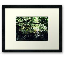 Undergrowth - Buntingsdale River Framed Print