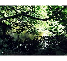 Undergrowth - Buntingsdale River Photographic Print
