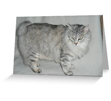 Cool American Bobtail Greeting Card
