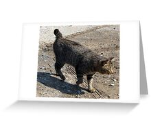 Awesome American Bobtail Greeting Card