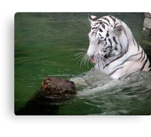 The Playful White Tiger Canvas Print