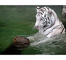 The Playful White Tiger Photographic Print