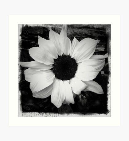 Plain and simple sunflower Art Print