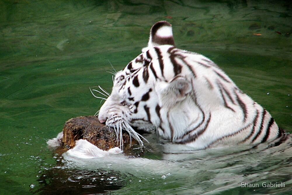 Playful White Tiger II by Shaun  Gabrielli