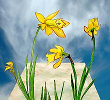 Daffodils Out of Bounds  by Anne Gitto