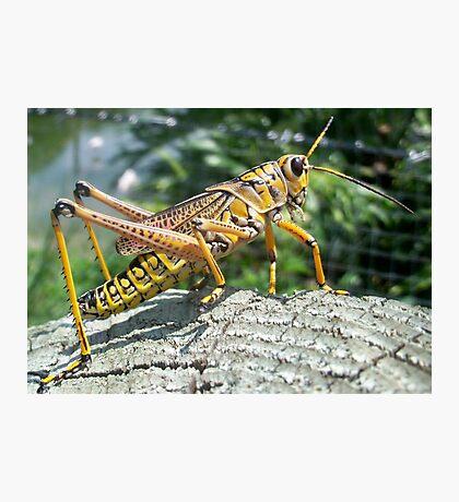 The Lone Grasshopper Photographic Print