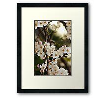 Japanese Cherry Blossoms I Framed Print