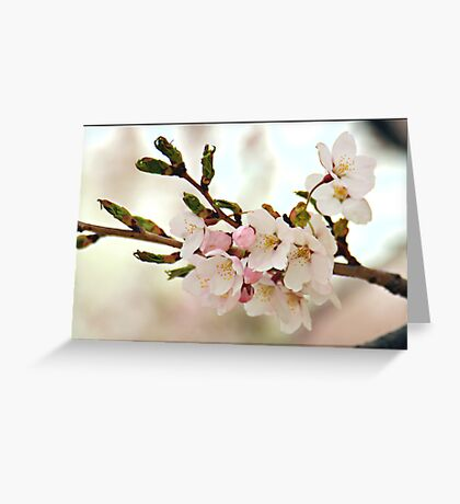 Japanese Cherry Blossoms II Greeting Card