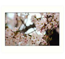 Japanese Cherry Blossoms IV Art Print