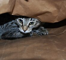 Cat In The Bag by jodi payne