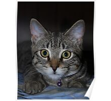 Portrait Of A Tabby Kitten Poster