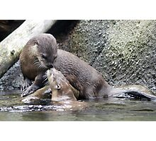Touching noses Photographic Print