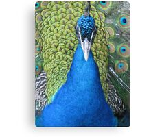Do not look at me in such a way, I am simply the nicest one Canvas Print