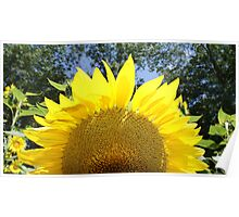 Sunflower Sunrise! Poster