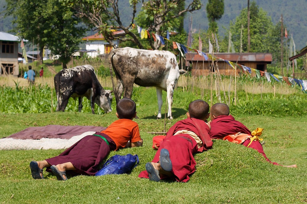 Cow Watching by BradBaker