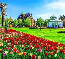 Springtime Tulips at the Conservatory Gardens - Bendigo, Victoria by sjphotocomau
