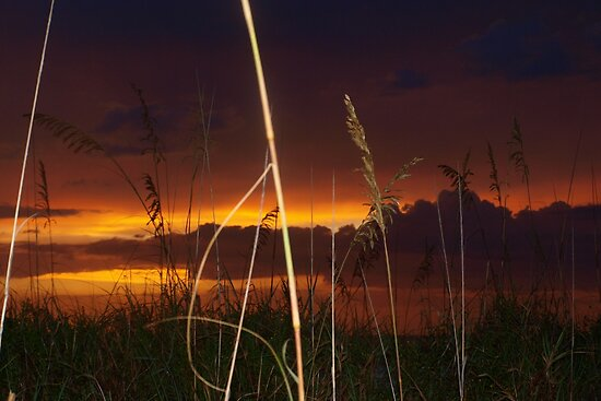 Sunset beyond the dunes by ♥⊱ B. Randi Bailey